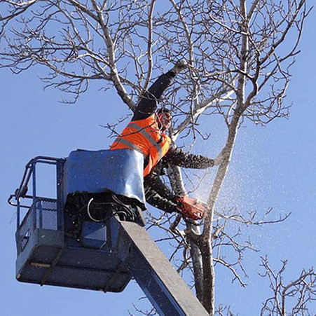 high tall tree removal