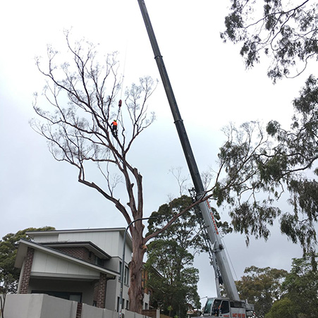 tree removal canberra act