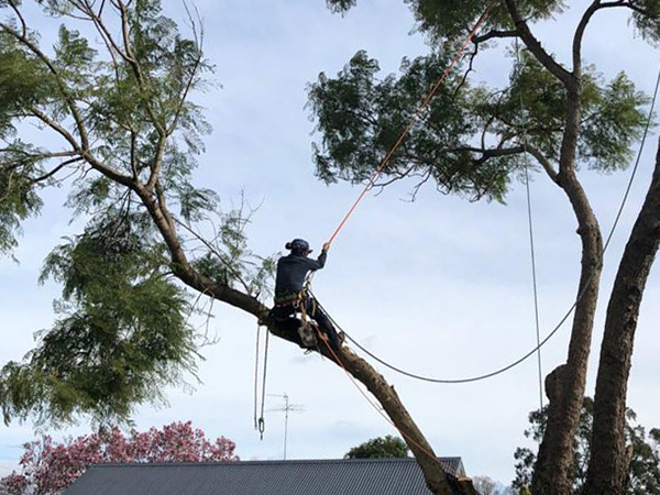 paramount tree services removal near me nearby (10)