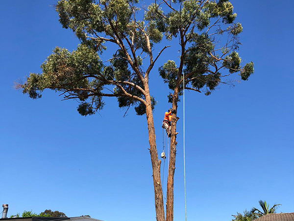 paramount tree services removal near me nearby (2)