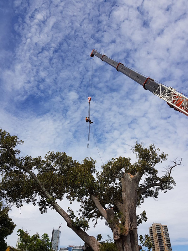tree removal canberra in the area