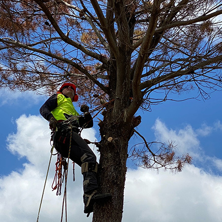 paramount tree removal canberra act aus (2)
